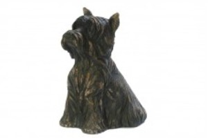 Yorkshire Terrier 1,3 lit 120,--